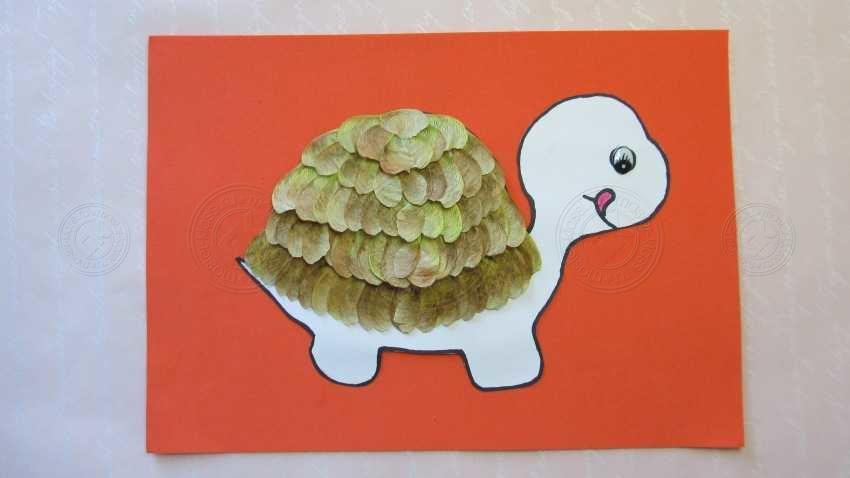 Как сделать детскую аппликацию черепаха из кленовых семян своими руками? Посмотрите готовую инструкцию, а также мастер-класс с фото