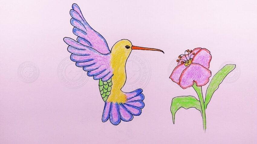 Как нарисовать птицу колибри поэтапно: мастер-класс для начинающих с фото, готовой схемой и описанием