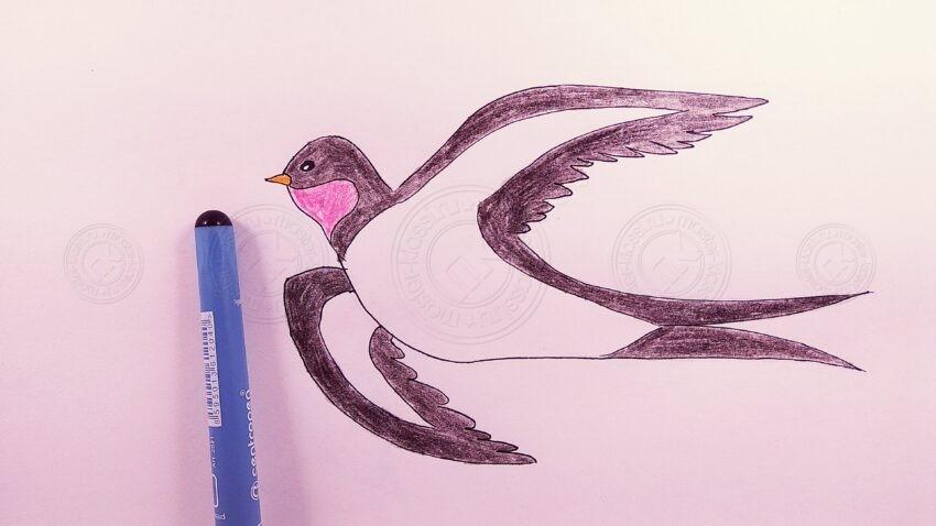 Как нарисовать ласточку поэтапно: легкий мастер-класс по рисованию для детей