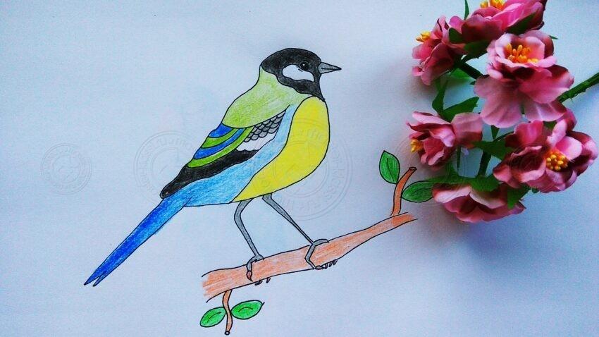 Как нарисовать синичку на ветке карандашами поэтапно: интересный урок рисования для детей в школу или садик