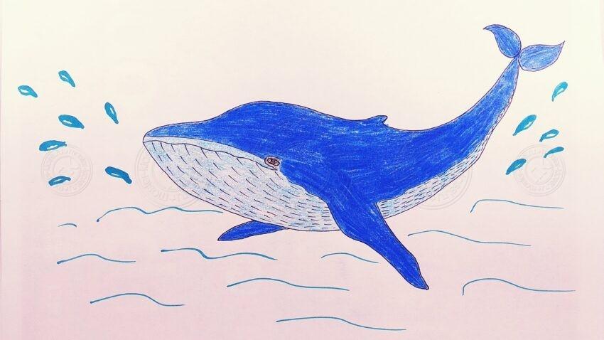 Как нарисовать кита своими руками поэтапно: легкий урок рисования для детей